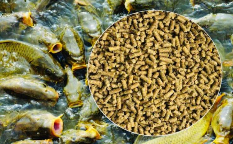 ООО «Агротехника» производит корма для промысловых рыб!