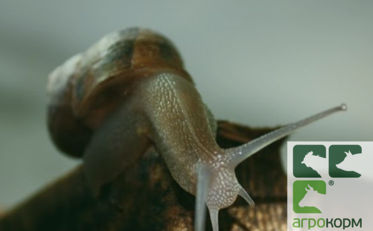 """ТзОВ """"Агротехніка"""" виготовляє під замовлення корм для ефективної годівлі равликів."""